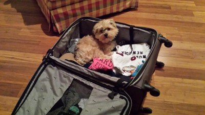 Brody the Morky in Ryan's luggage