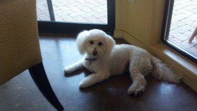 Sweet Gabby the dog