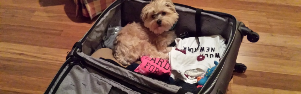 Brody in suitcase