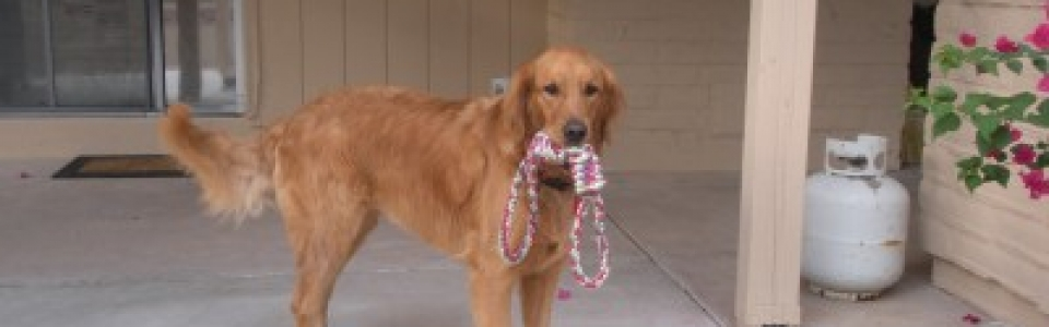 Maggie loves to play with rope outside as well as go for dog walks with her dog walker