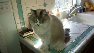Lilly on the counter