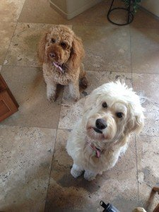 Phoebe and Molly our overnight pet sit clients