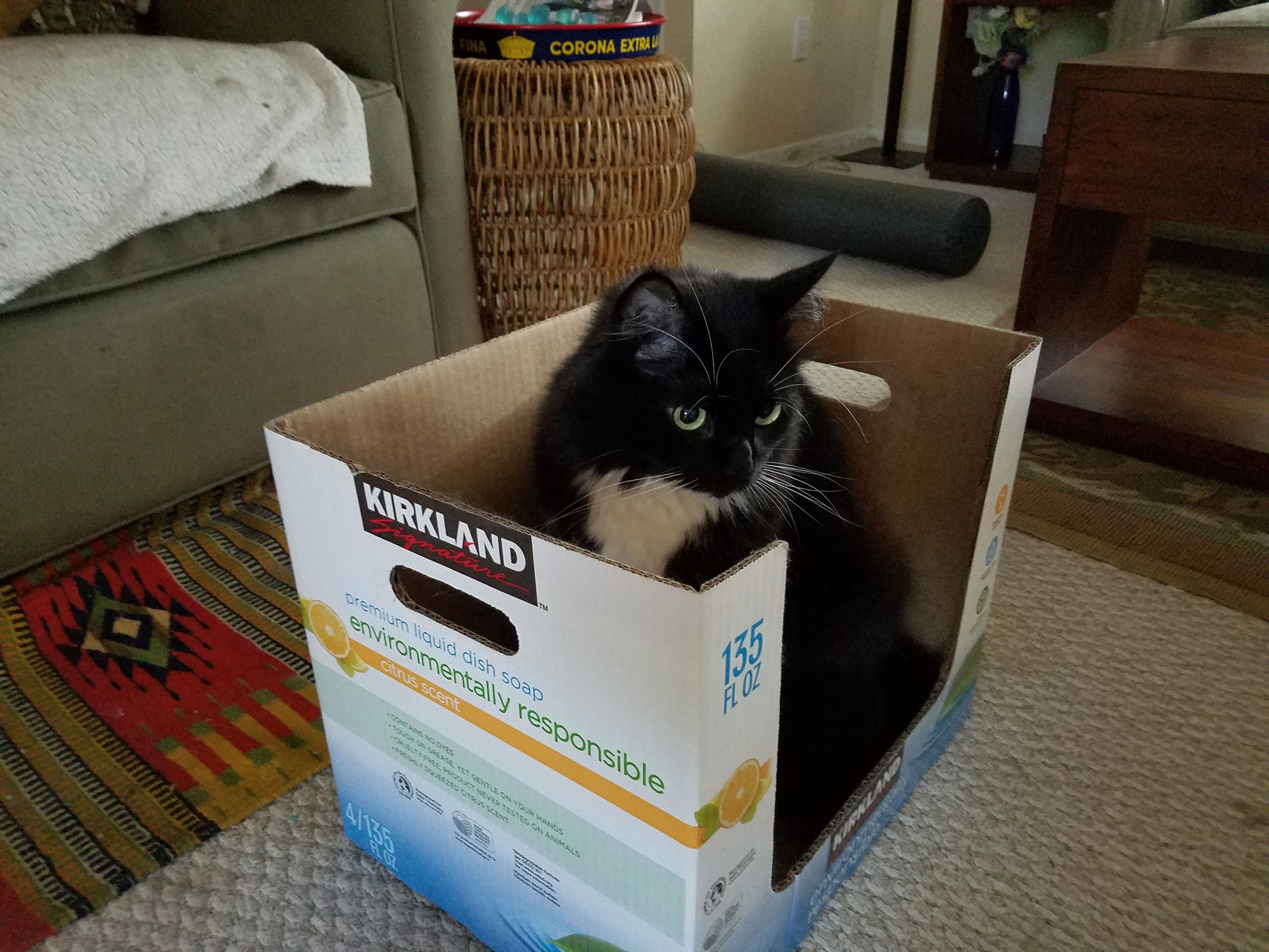 cat playing in a box