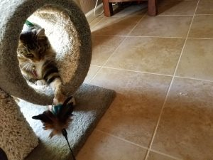 Kitty in cat tree playing with toys