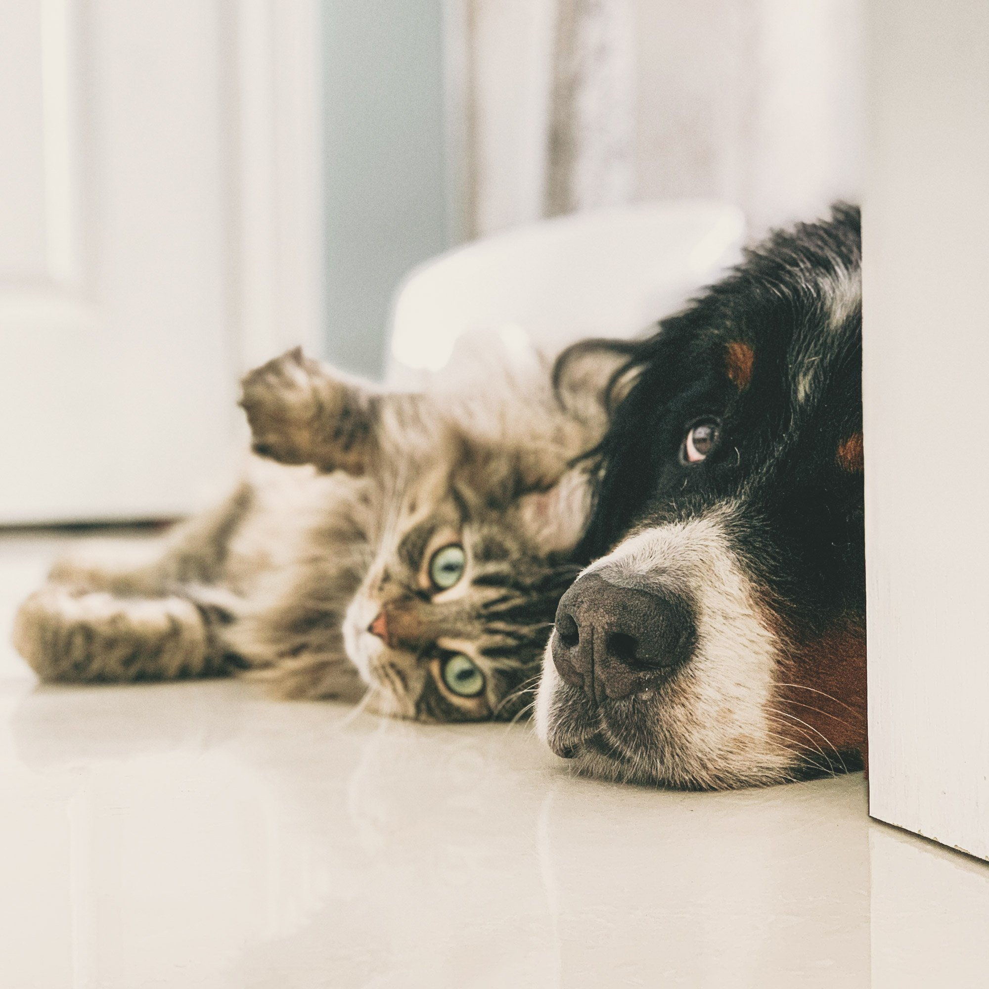 Dog and cat laying on the floor