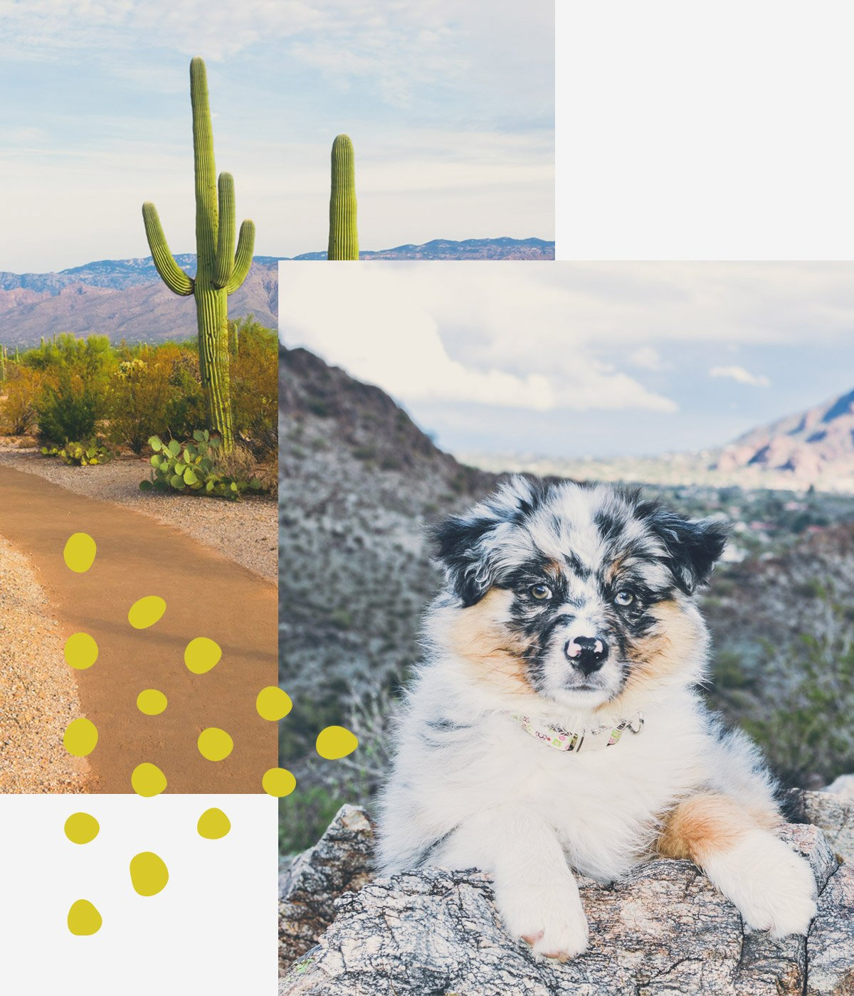 Dog sitting in desert with a cactus